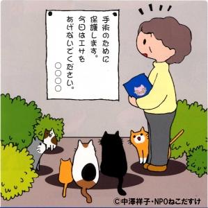 地域ねこ画像 新宿区保健所職員と、東京都動物愛護推進員による、地域ねこ活動についての... 地域